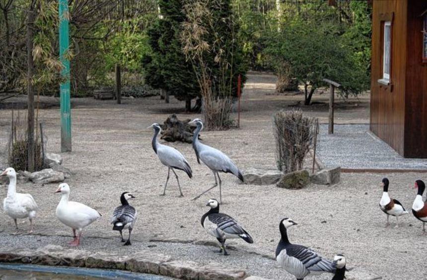Im Heddesheimer Vogelpark herrscht ein buntes Treiben. Ab 28. März können sich Besucher davon ...