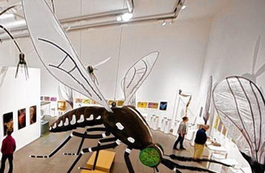Einblicke in die Insektenwelt gibt es im Museum Wiesbaden.