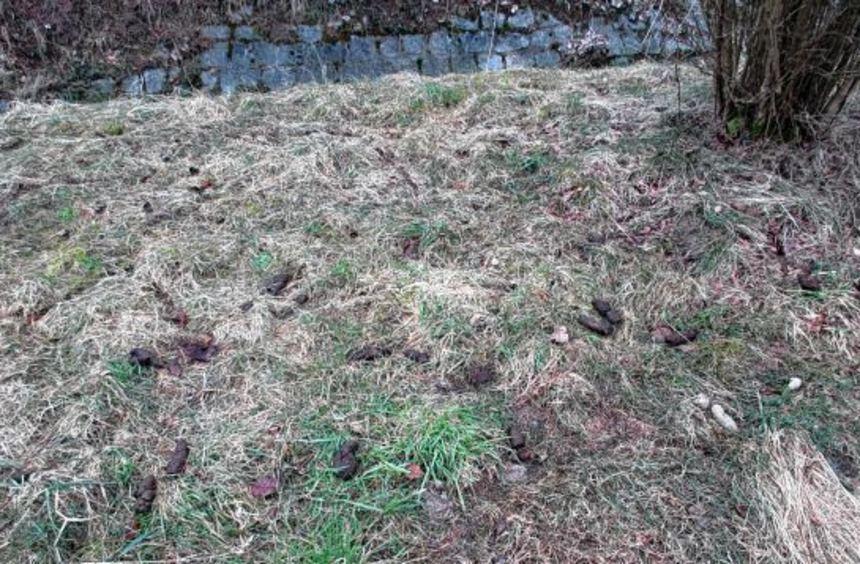 Hundekot auf Grünflächen ist in Lautertal derzeit wieder ein großes Problem. Das Ordnungsamt weist ...