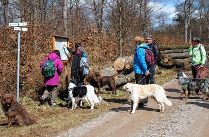 Bunt gemischt: Hunde, Frauchen, Herrchen auf Tour im hessischen Rheingau.