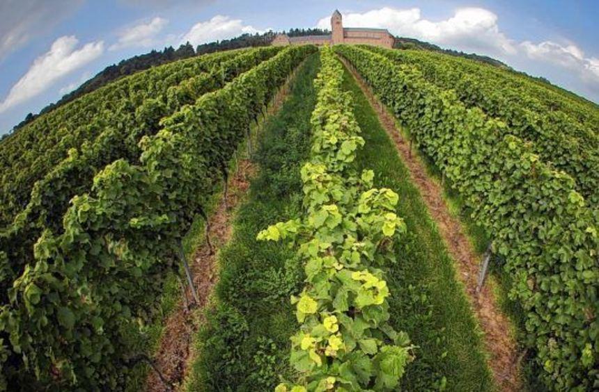Die Beschaffenheit des Bodens kann sich im Geschmack des Weins wiederfinden.