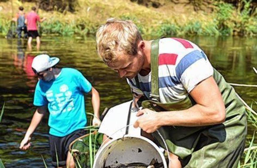 Freiwillige Helfer sammeln tote Fische in der Jagst.