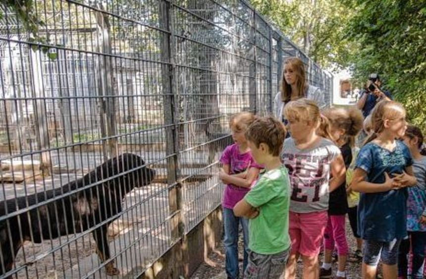 Nicht nur Kuscheltiere gibt es im Heppenheimer Tierheim. Auch sogenannte Listenhunde wie dieser ...