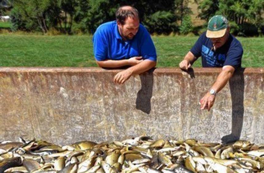 Giftiges Löschwasser in der Jagst hat ein großes Fischesterben ausgelöst.
