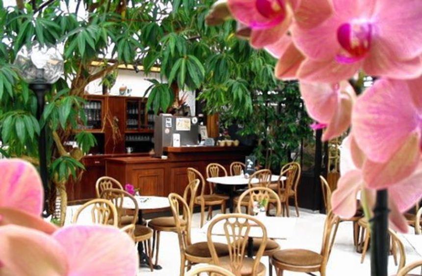 Umgeben von den farbenprächtigen Orchideen, genießen die Gäste in gemütlicher Atmosphäre.