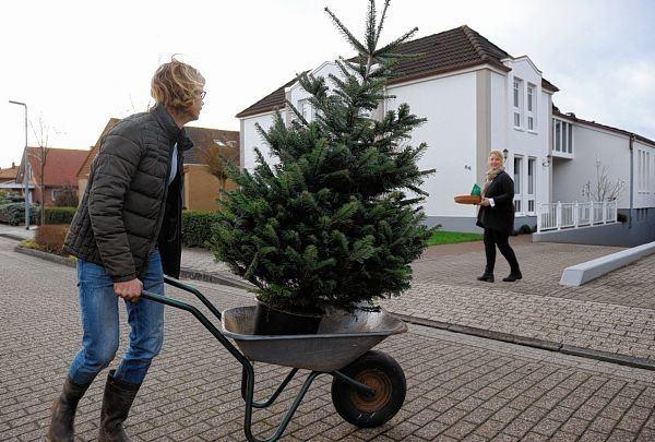 Weihnachtsbaum im topf mannheim