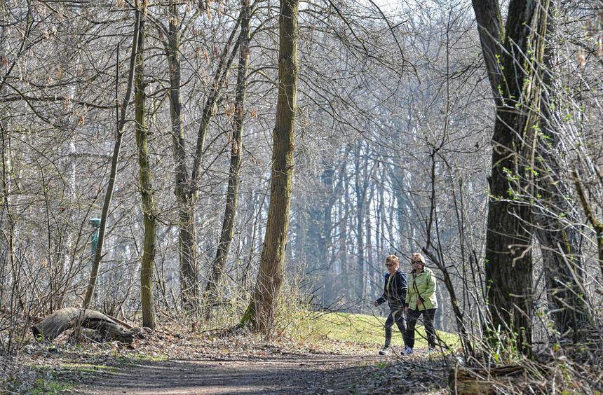 Die Wege sind gesäubert, die Hinweisschilder erneuert: Der Dossenwald lädt zu Wanderungen oder ...