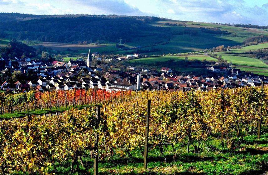 Der Weinort Markelsheim verfügt seit mehr als zwei Jahrzehnten über einen eigenen Tourismusverein. ...