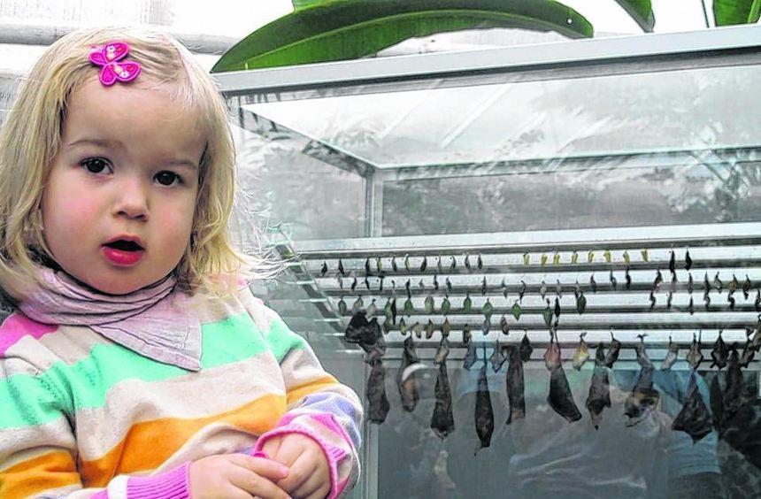 """""""Schmetterlinge gehen"""": Das sagt die kleine Milla, wenn sie will, dass ihr Vater mit ihr das ..."""