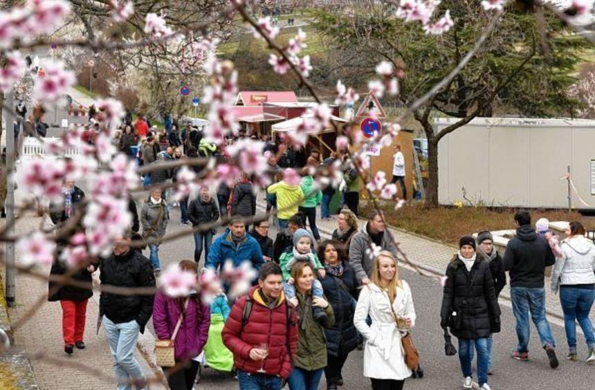 Trotz niedriger Temperaturen war Betrieb beim Mandelblütenfest in Gimmeldingen. An beiden Tagen ...