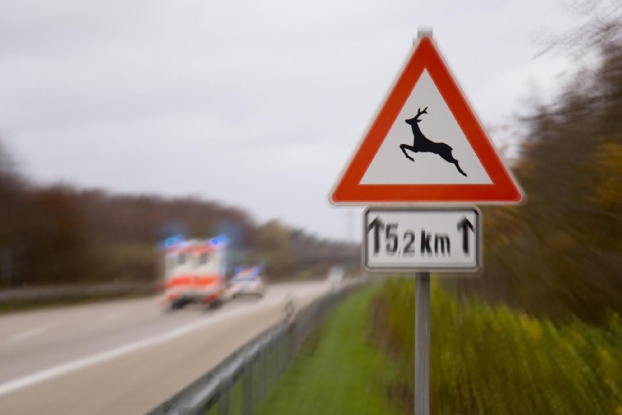 Ratgeber: Wildunfall - Herbstliche Gefahr auf Waldstrecken