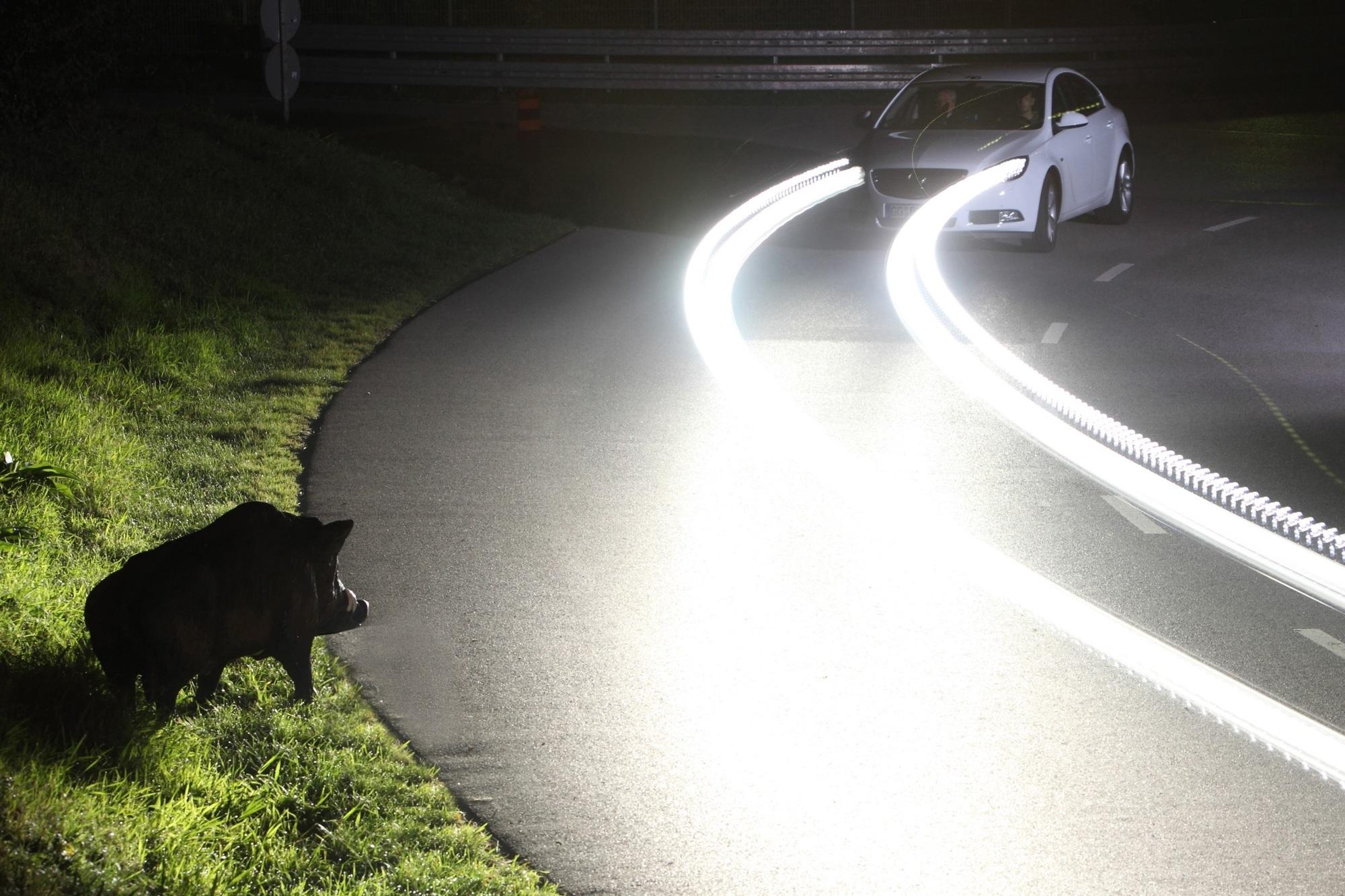 Ratgeber: Wildwechsel in der Dämmerung - Kein Schwein versteht die Zeitumstellung