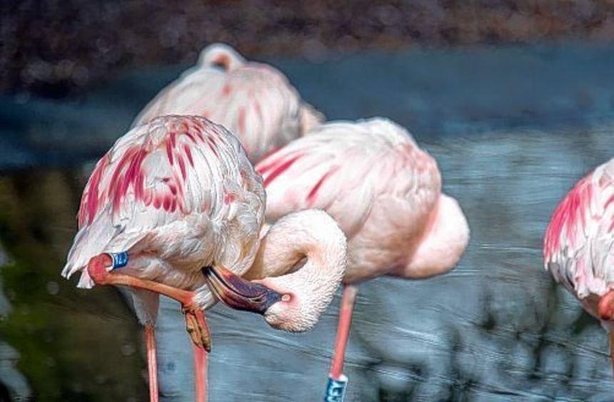 Der Frühjahrsputz ist abgeschlossen und der Vogelpark wieder geöffnet. Damit die Flamingos ihre ...