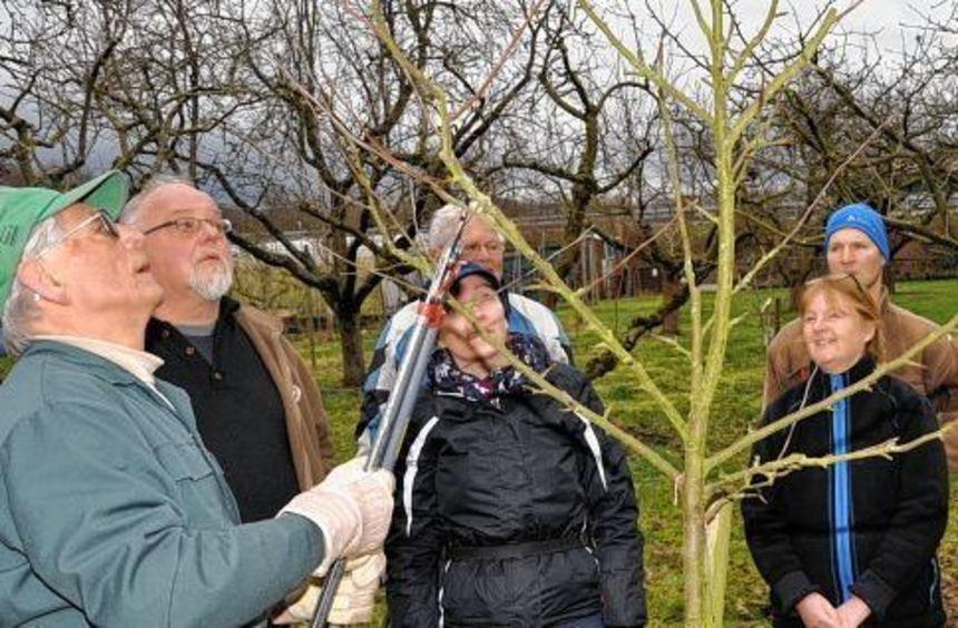 Baumfachwart Norbert Feldmeier (links) erklärte interessierten Gartenfreunden, worauf es beim ...