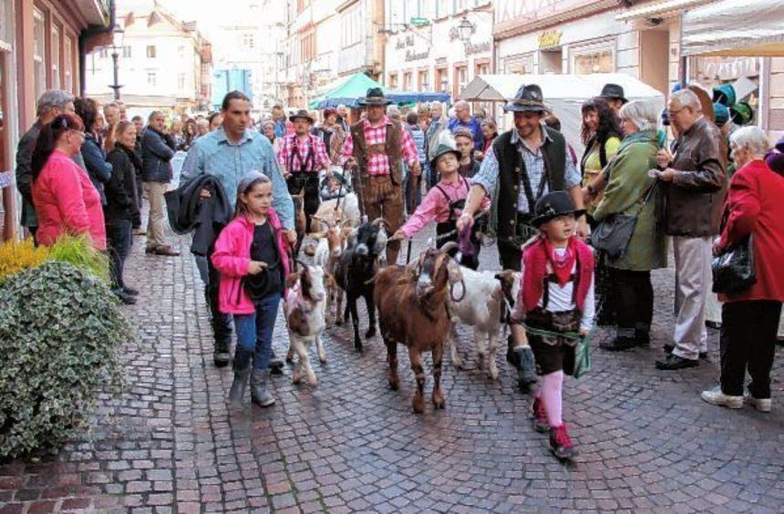 """Im Rahmen des Wertheimer Bauernmarkts gibt es auch einen """"Burgalm""""-Abtrieb der Wertheimer ..."""