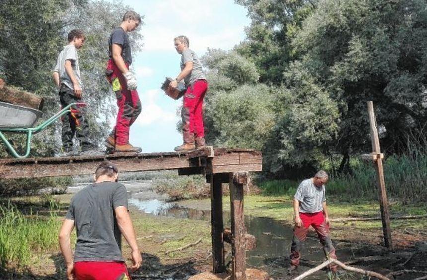 Mitarbeiter des Forstamts haben den alten Steg am Lampertheimer Altrhein zurückgebaut. Für die neue ...