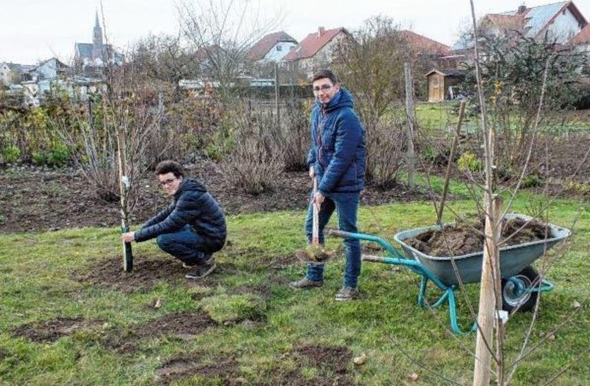Abgeschlossen ist die Bepflanzung des Sortengartens in Sachsenhausen. Florian Vollrath (links) und ...