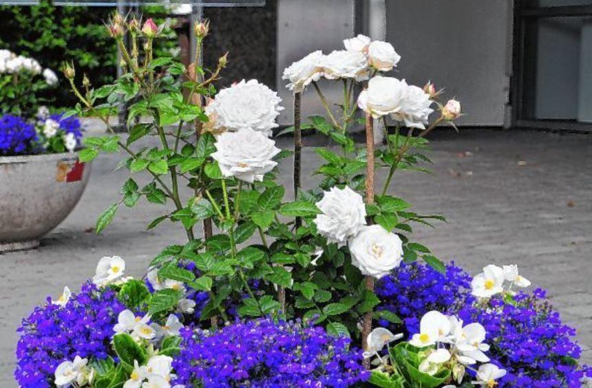 Mit Hinguckern hat der Verschönerungsverein Reichenbach immer wieder die Aufmerksamkeit für ein ...