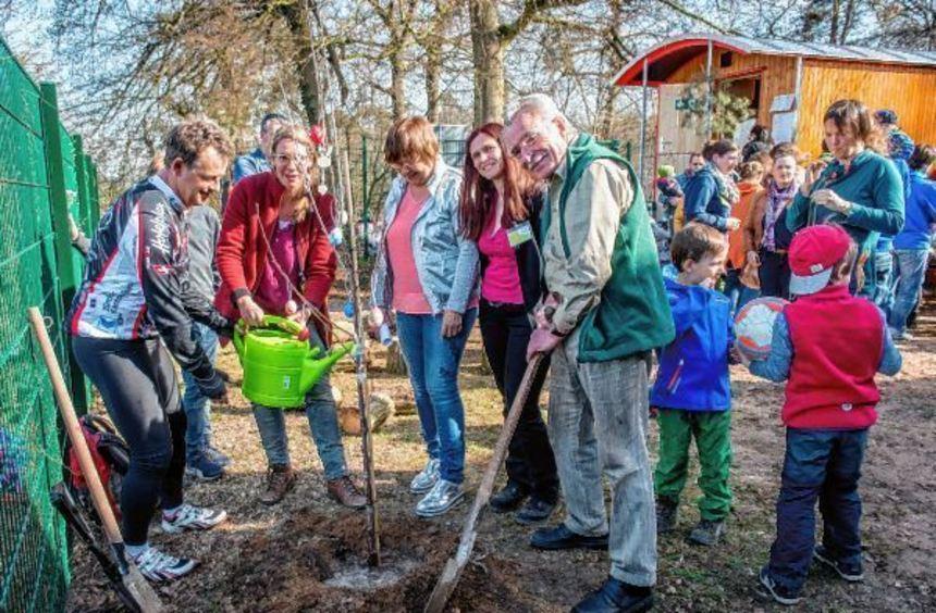 Beim Willkommensfest im neuen Lorscher Naturkindergarten wurde auch ein Kirschbaum gepflanzt.