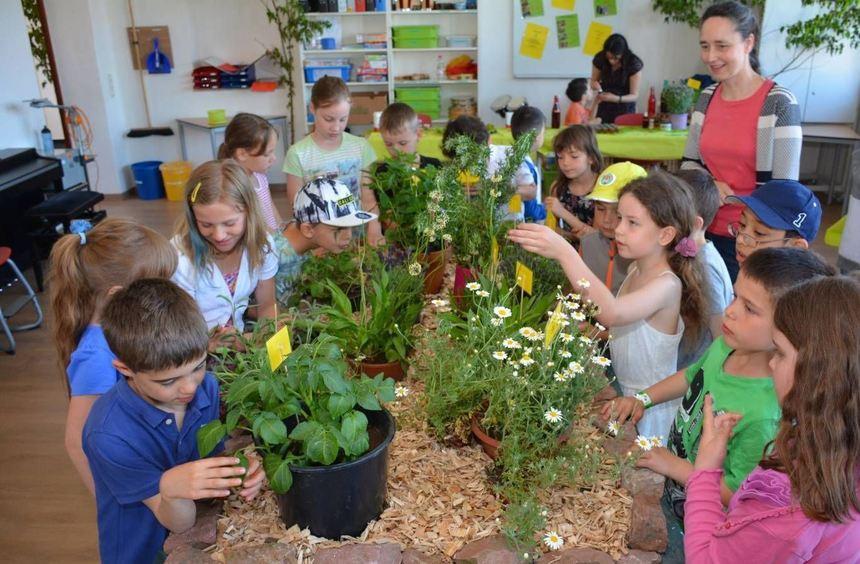 Das Musikzimmer der Markusschule verwandelte sich in einen Wald mit vielen Kräutern.
