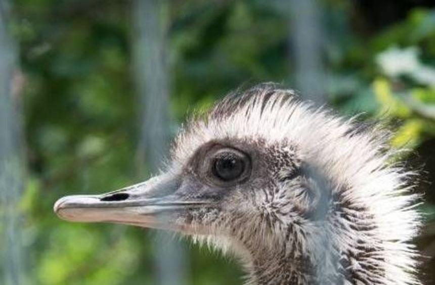 Der Lorscher Vogelpark ist ein beliebtes Ausflugsziel.