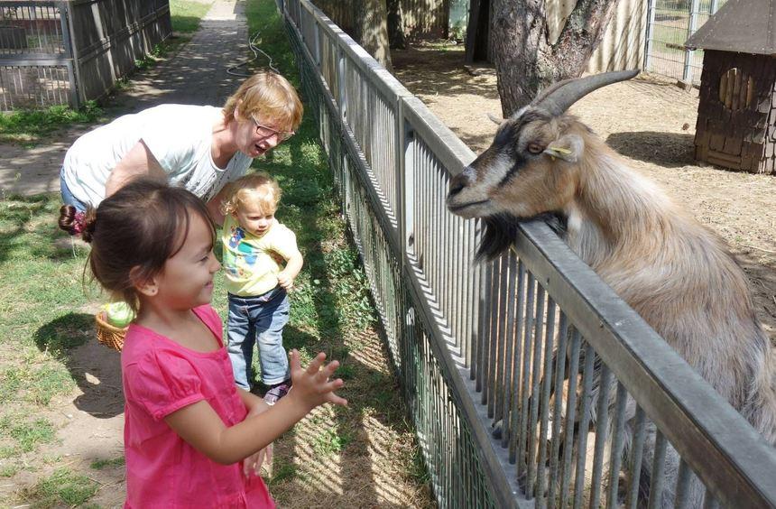 Megan (vorne), Heike Dinges und Enkeltochter Dorothee statten dem Ziegengehege beim Kinderfest im ...