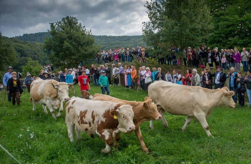 Fast wie in den Bergen: In Gronau gibt es in diesem Jahr wieder einen Alm-Abtrieb.
