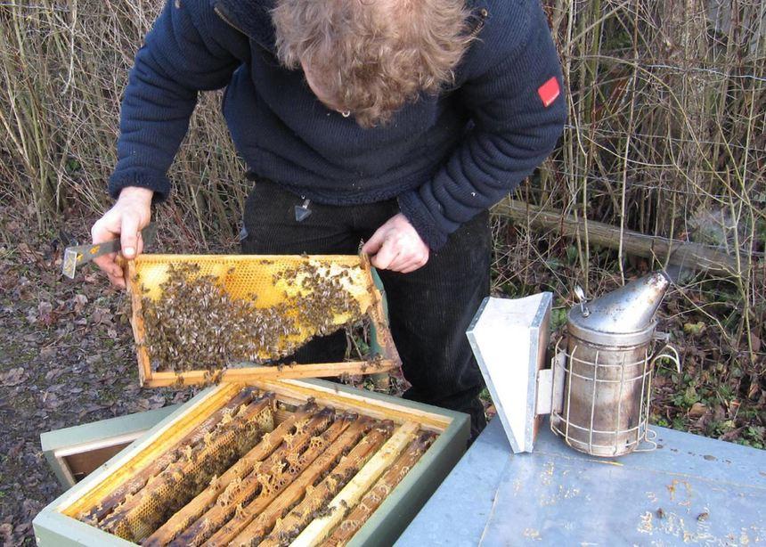 Bienen brauchen Energie für den Lenz