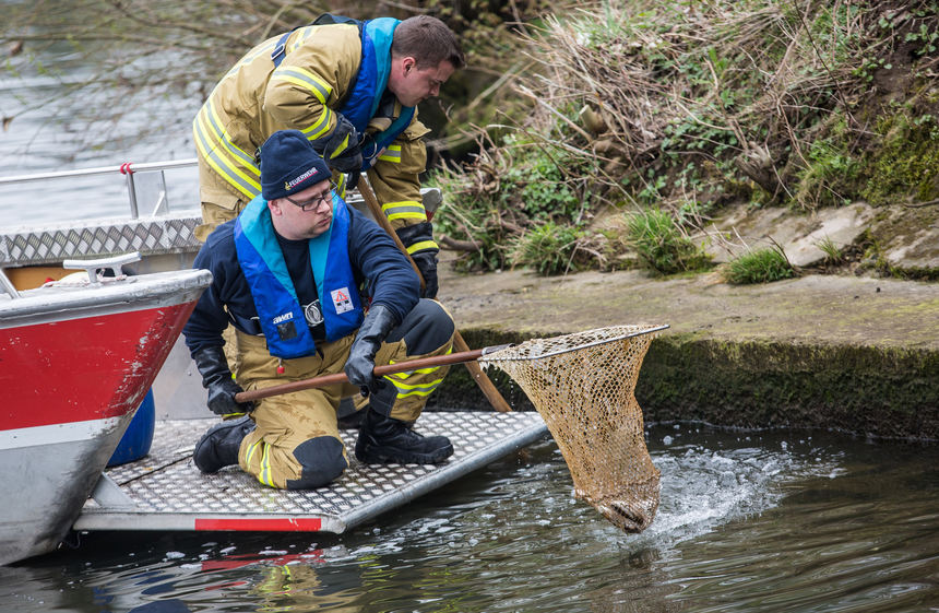 Massenhaftes Fischsterben In Fluss Bei Heilbronn Unfall