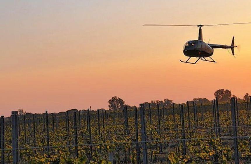 Ein Hubschrauber im Tiefflug über einem Weinberg in Niederkirchen: Zum ersten Mal wurde in der ...