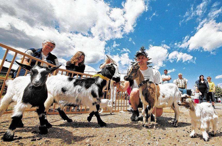Im Zeichen der Ziege stand am Wochenende der Europaplatz bei der Schau des Ziegenzuchtvereins ...