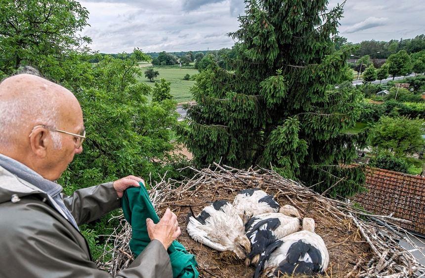 Richard Mohr an seinem luftigen Arbeitsplatz: Der ehrenamtliche Mitarbeiter der Vogelwarte ...