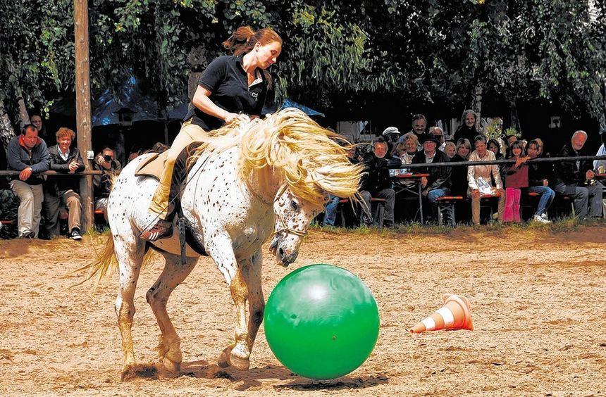 Spiel und Sport für Mensch und Tier bietet die Heppenheimer Kaltblutschau am Sonntag.