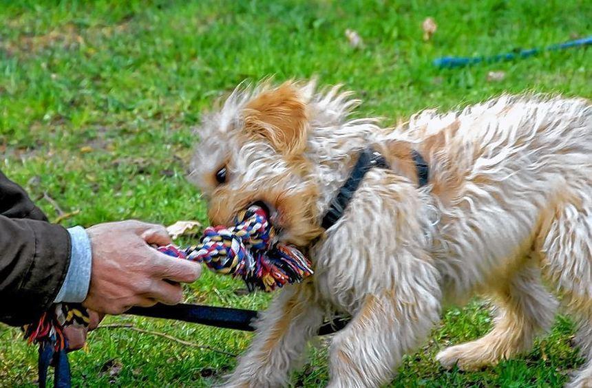 Spaß für junge Hunde verspricht das Turnier in Lorsch.