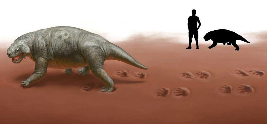 So muss der Pareiasaurier ausgesehen haben. Im Hintergrund der Größenvergleich mit einem Menschen.