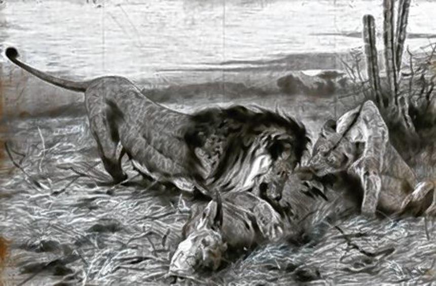 """Ein Glanzlicht der Auktion: """"Löwe mit Beute"""" von Wilhelm Kuhnert."""
