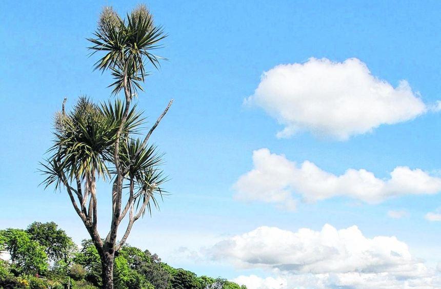 Palmen prägen die Uferpromenade von Plockton, das als Ausgangsbasis für zahlreiche Tagesausflüge ...