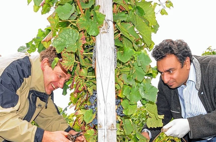 Christian Schönung und Adil Oyan (rechts) bei der Weinlese.