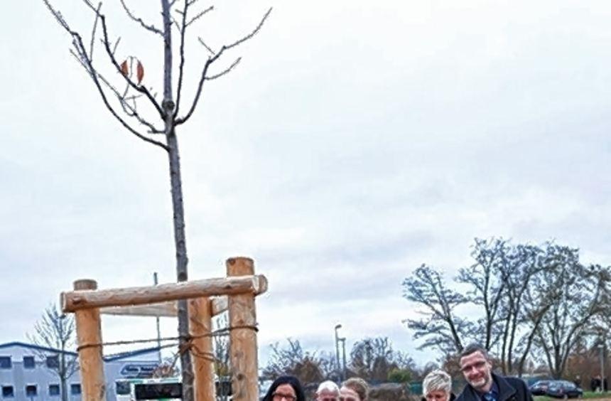 R. Federkiel (M.), B. Fritzenschaft (l.) und K. Dillinger setzen einen Baum.