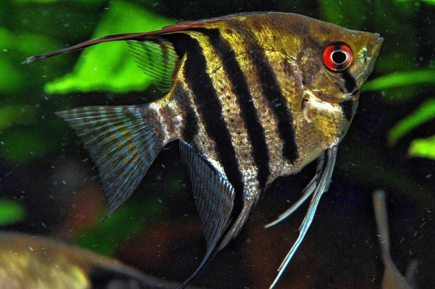 Anfanger aquarium trendy einsteiger grosse anfanger for Welche fische fur miniteich