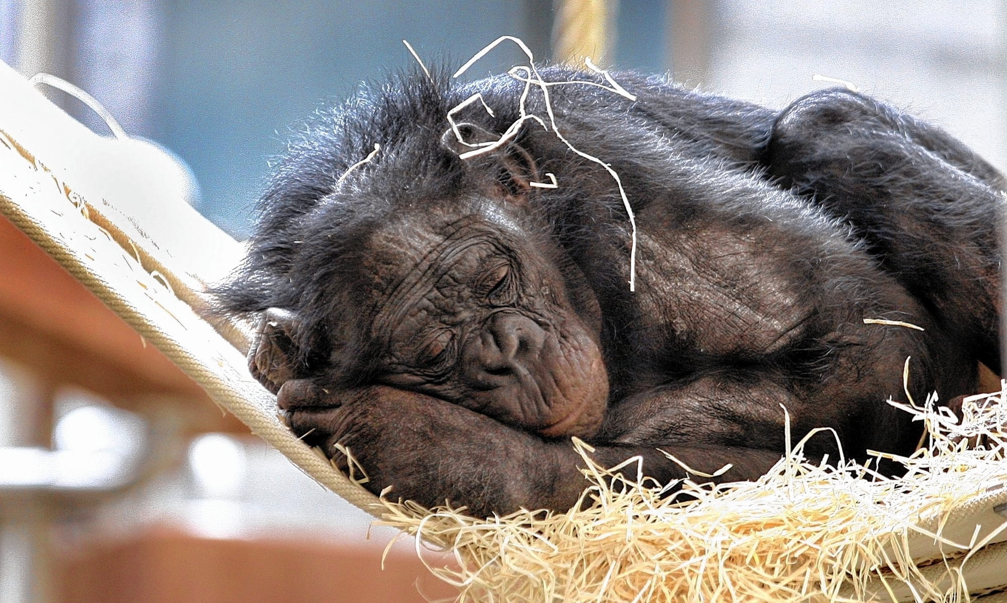 sch ner wohnen f r bonobos s dwest nachrichten morgenweb. Black Bedroom Furniture Sets. Home Design Ideas