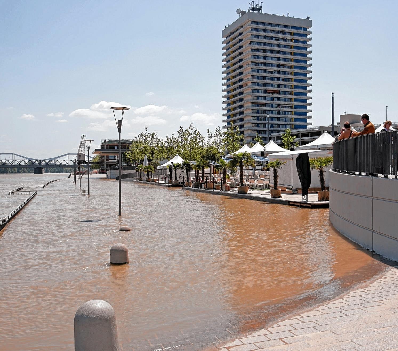 Hochwasser in der region hochwasser metropolregion for Restaurant mannheim hafen