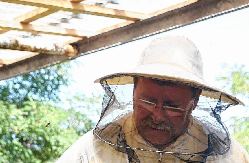 Herbert Holzwarth nähert sich mit Imker-Schleier seinem Bienen-Volk. Doch er fürchtet Stiche nicht, ...