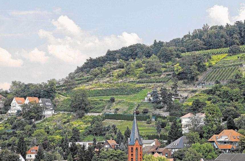 Wenigstens östlich des Starkenburgwegs soll der Heppenheimer Schlossberg nach dem Willen der ...