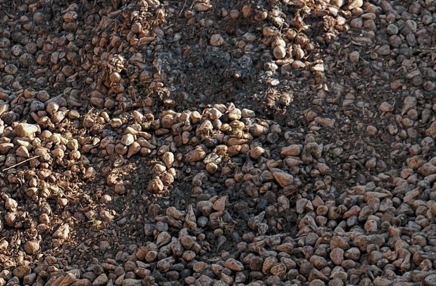 Alles auf Zucker: Auch ins laufende Geschäftsjahr 2012/13 ist Südzucker nach den Worten von ...