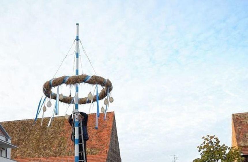 Mit dem Stellen des Kerwebaums wird am Freitagabend auch die diesjährige Heddesheimer Kerwe wieder ...